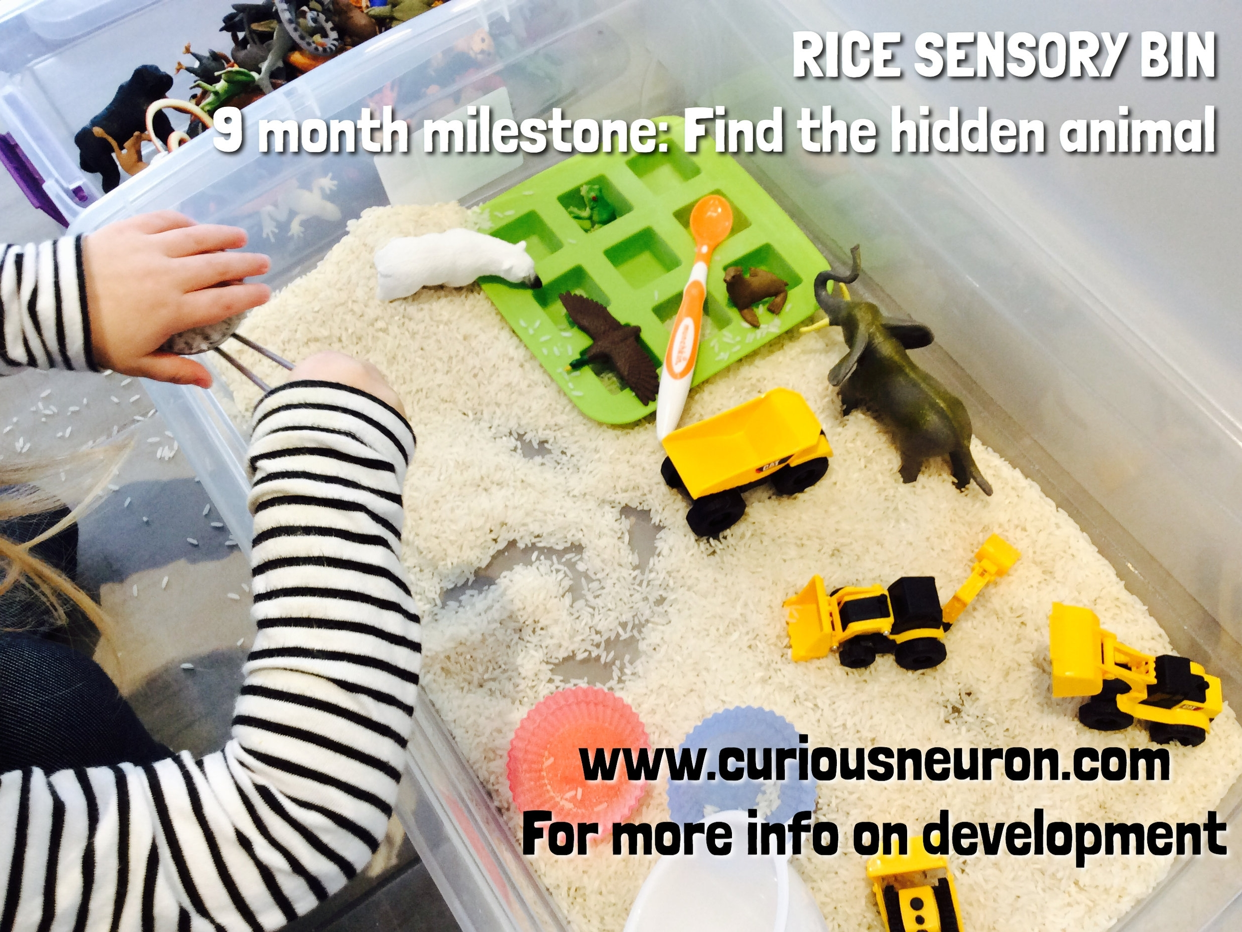 Hide small objects or animal figurines in a sensory bin or rice or dried oatmeal. Use this activity to teach older babies or young toddlers words associated with objects or animals.    9 month cognitive milestone  : Finding hidden objects  Working memory: Hiding games are also a great challenge for  working memory .