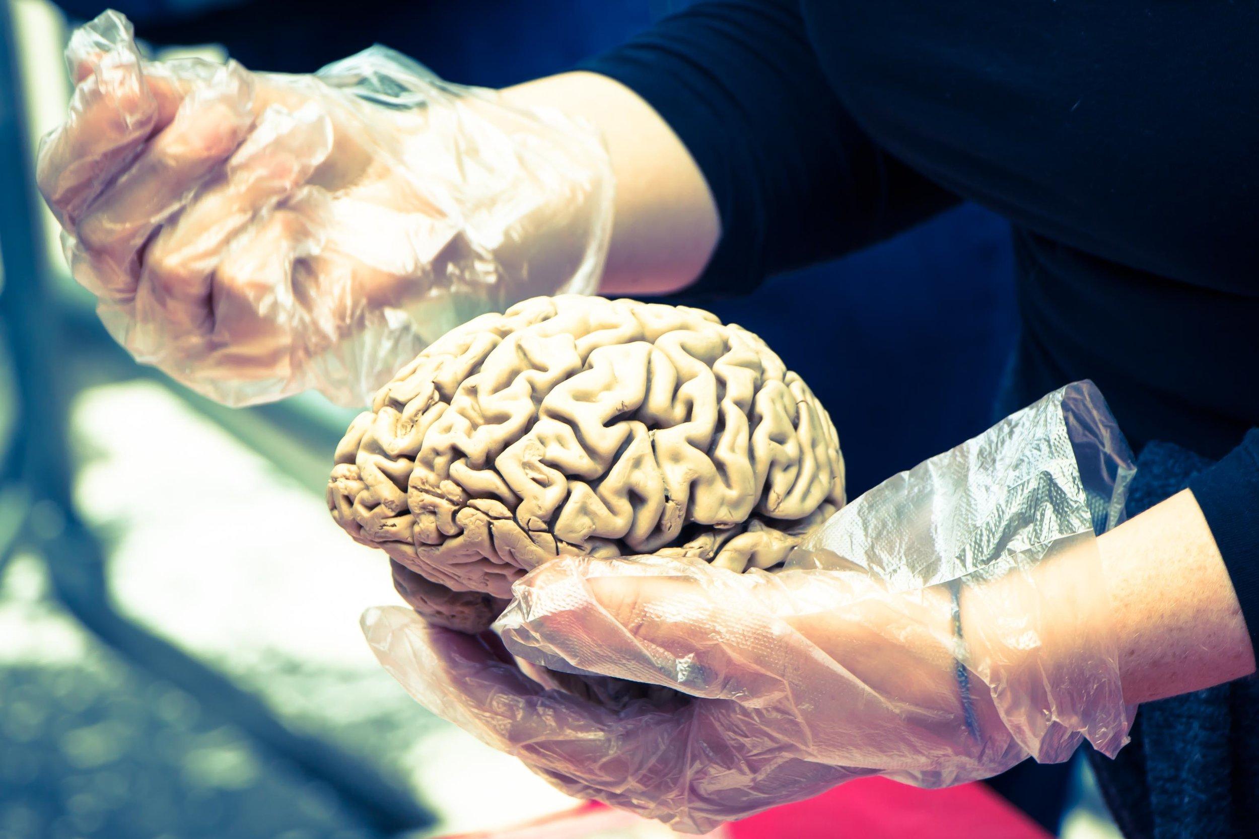 hand-biology-arm-muscle-human-body-brain-14176-pxhere.com (1).jpg