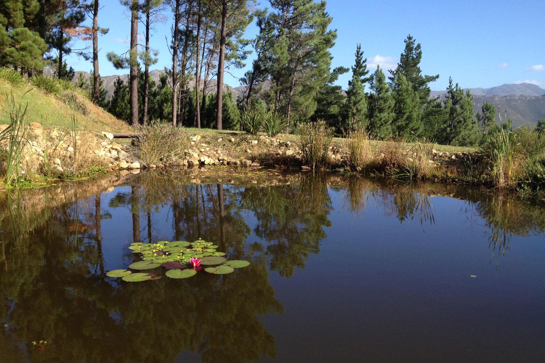 Pond-4.jpg