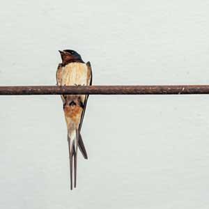 SummerCorner_Birds_thumb.jpg