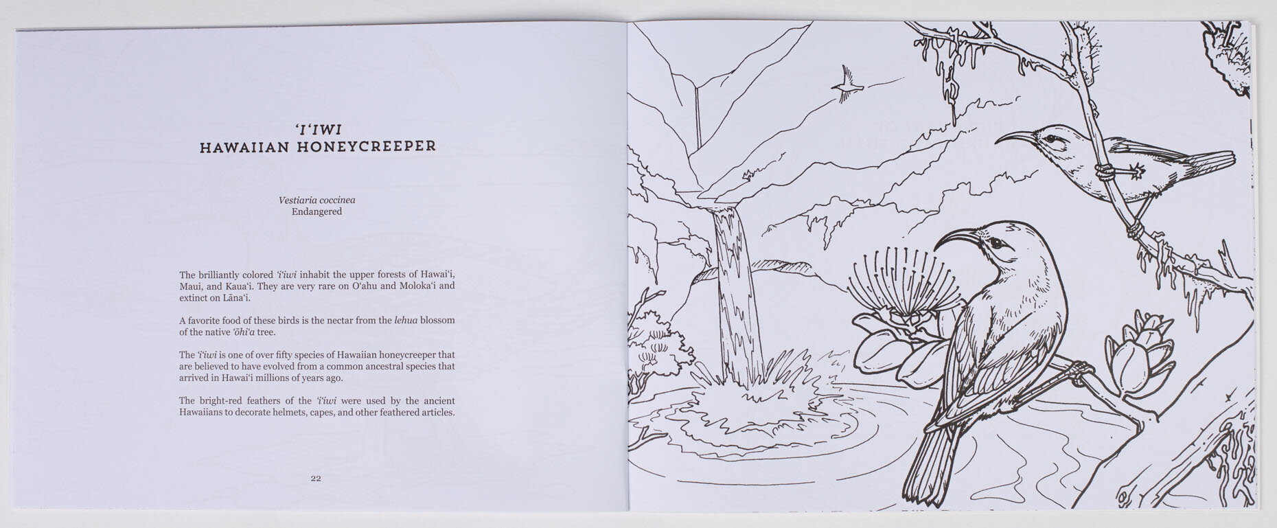 Endangered Animals Of Hawaiʻi Coloring Book Children's Books PRODUCTS