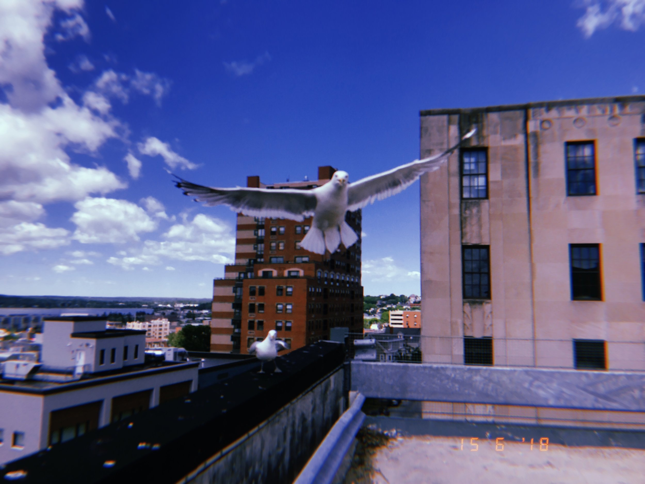Whenever I visit a new town or city, I always look for a carpark or similarly tall structure so I can capture some decent aerial shots of wherever I am. In this particular carpark in Portland, Maine was some nesting seagulls who felt threatened enough to chase me the little bastards!