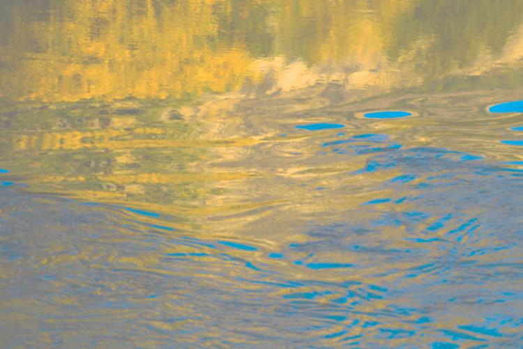 David Jordan Williams - blue + yellow nature