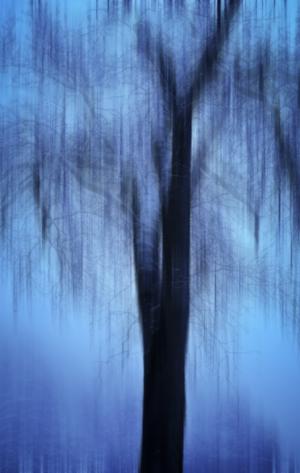 David Jordan Williams - motion trees