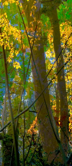 David Jordan Williams - vertical tree panels