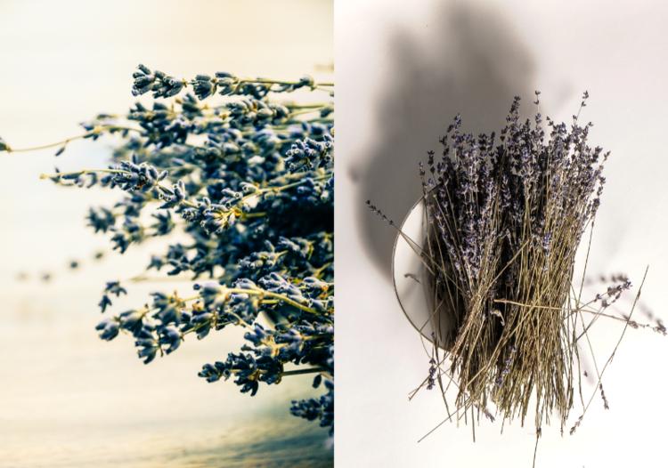 David Jordan Williams - herbs - pods - wellness