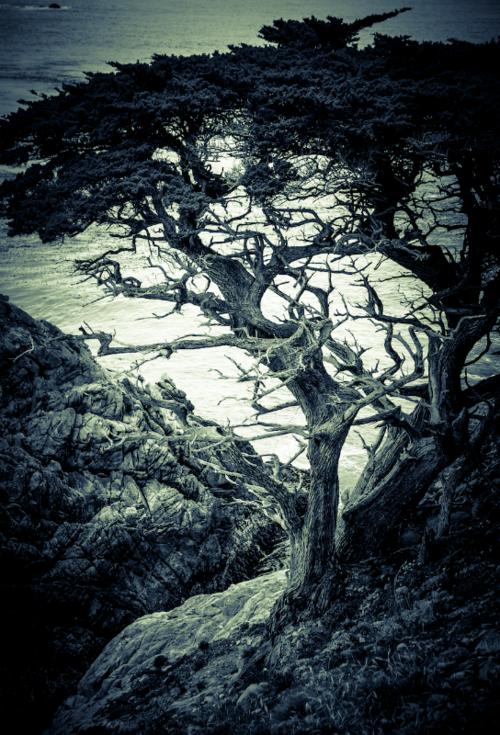 David Jordan Williams - california coast