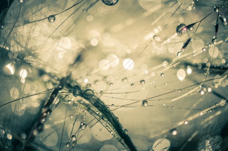 David Jordan Williams - morning dew drops