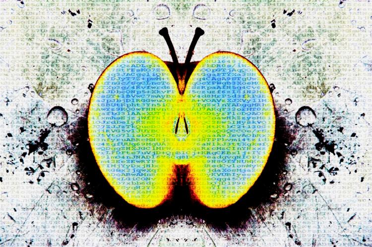 David Jordan Williams -  pop apples