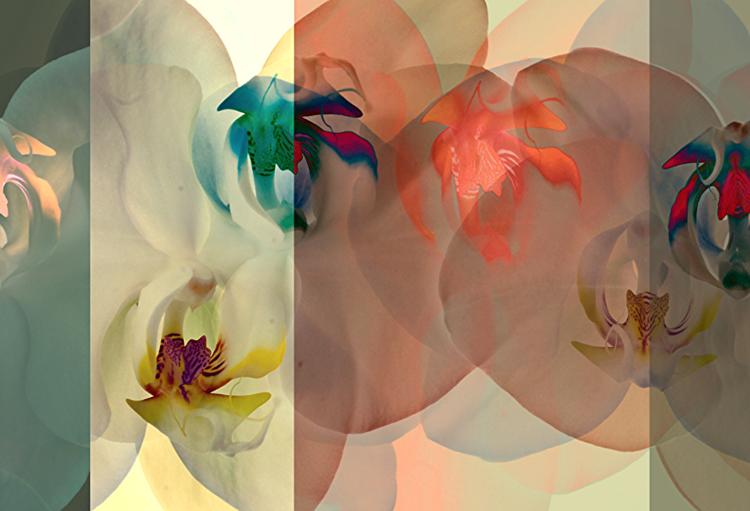 David Jordan Williams -  flora abstract
