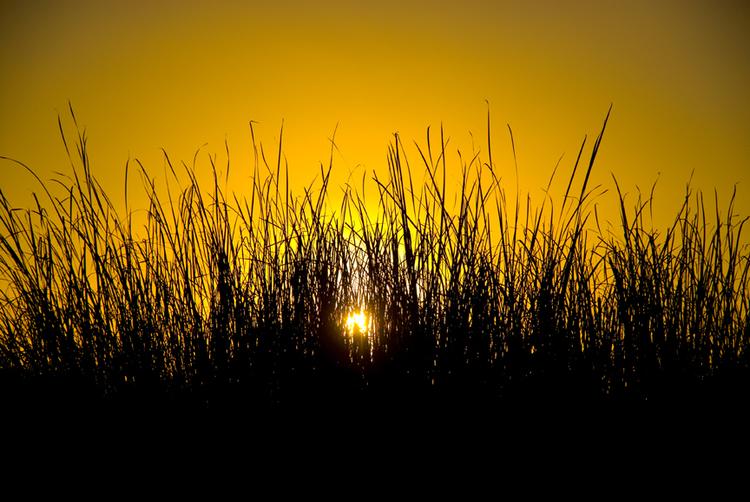 David Jordan Williams - wetlands