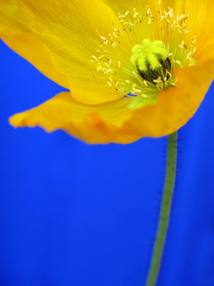 Geoffrey Baris flowers