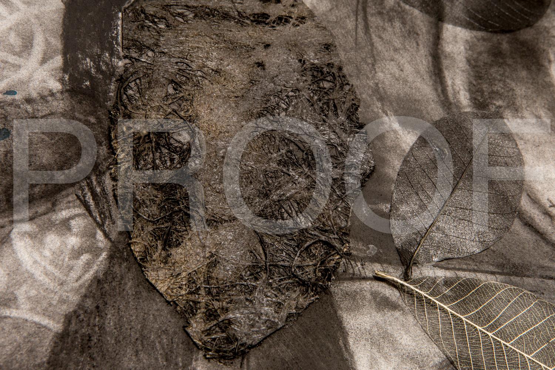 IMG_4090 © David Gary Lloyd.jpg