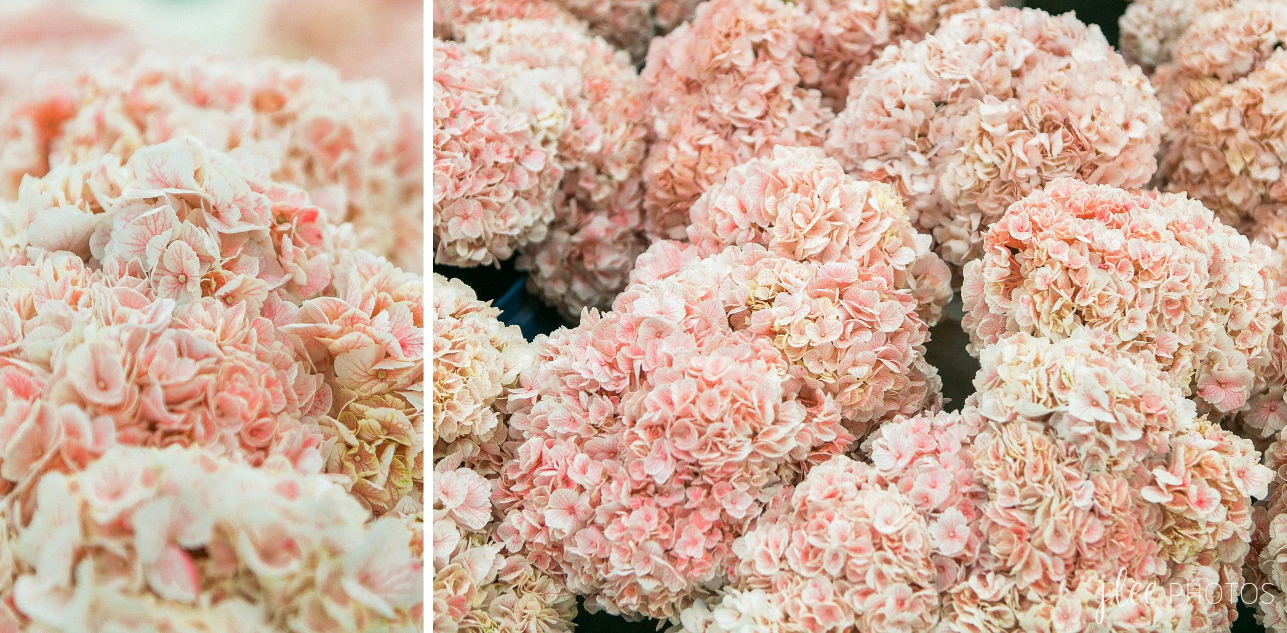Los Angeles Flower Mart Hydrangea