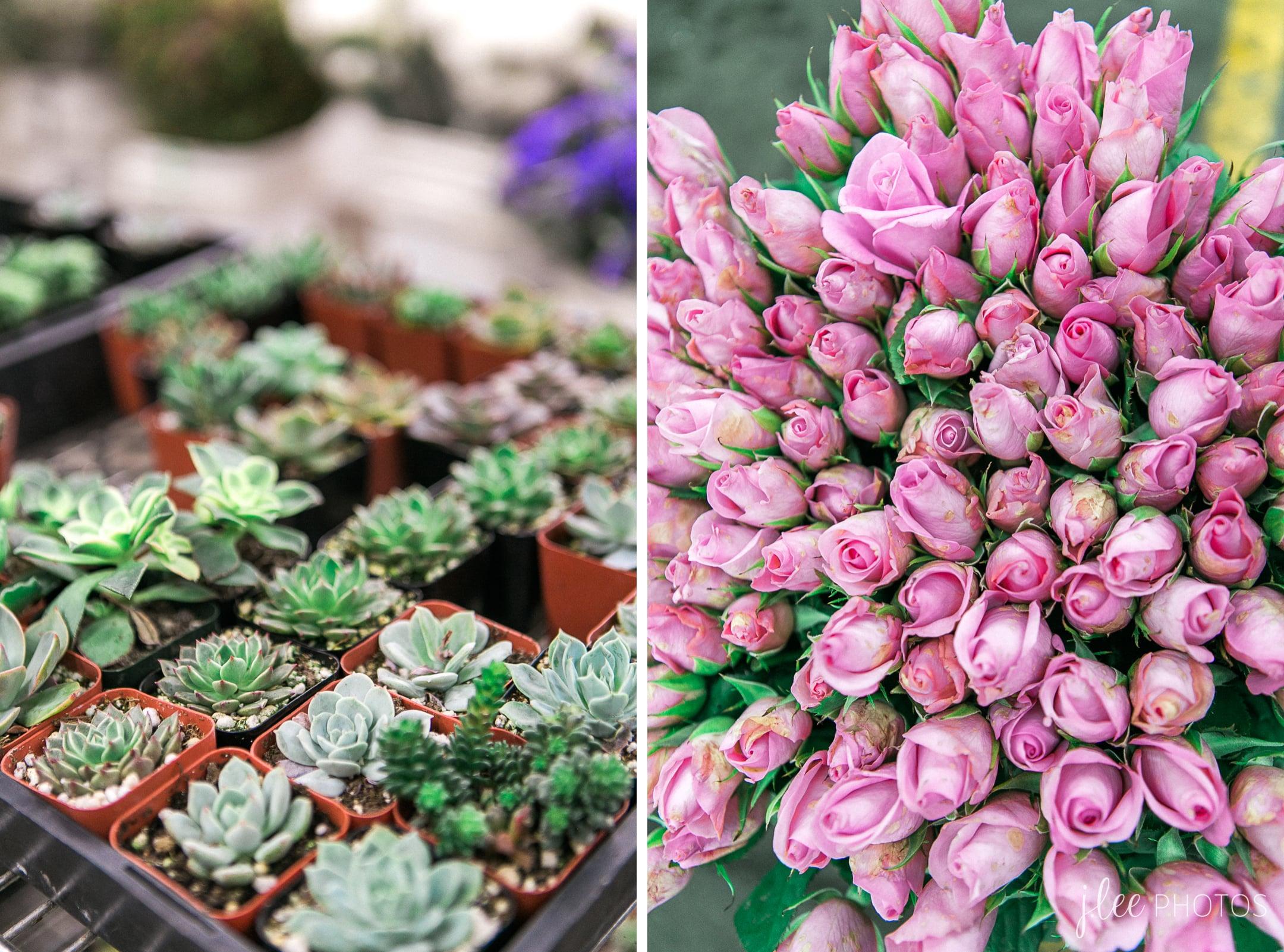Los Angeles Flower Mart succulents