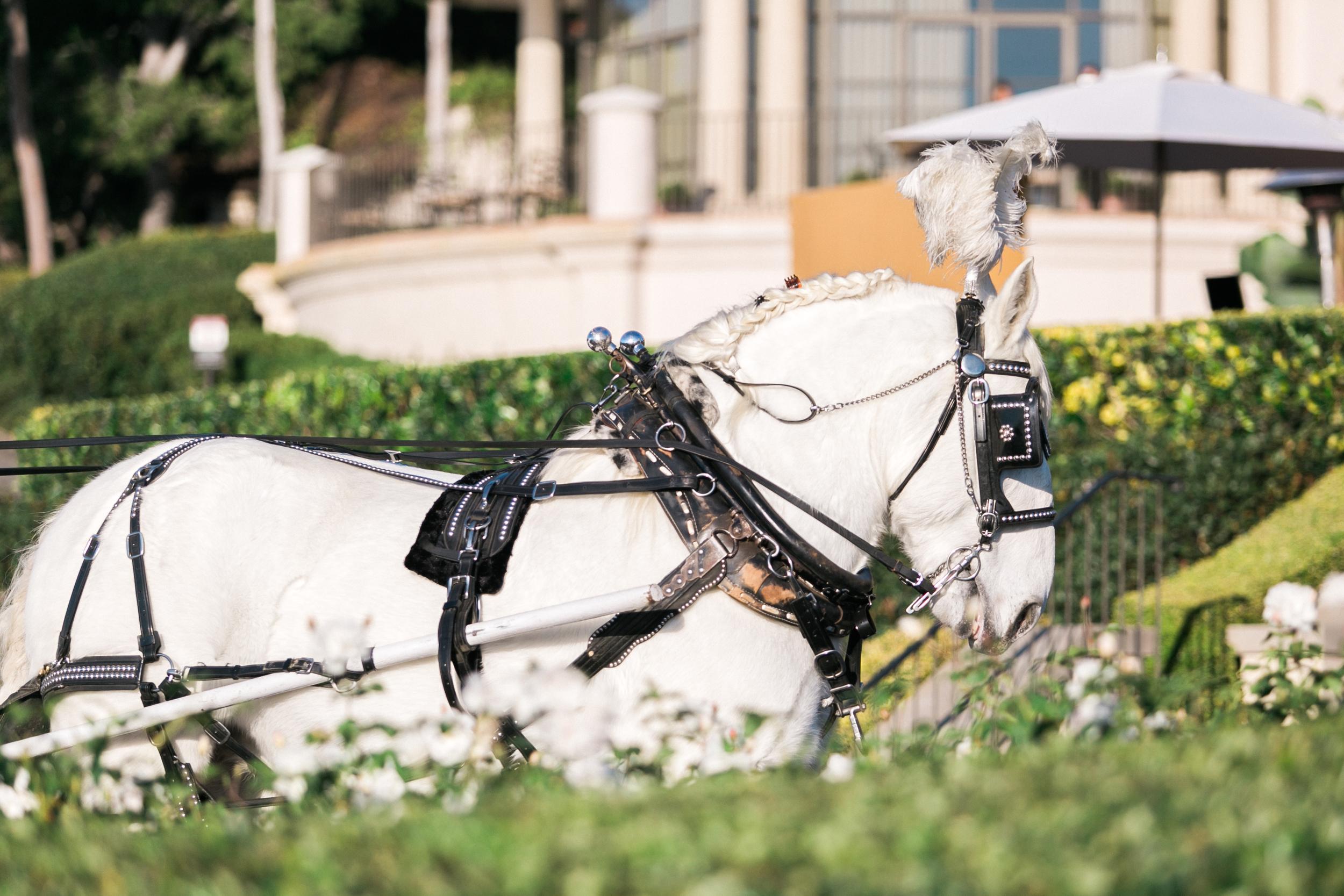 Horse Carriage Pelican Hill Wedding