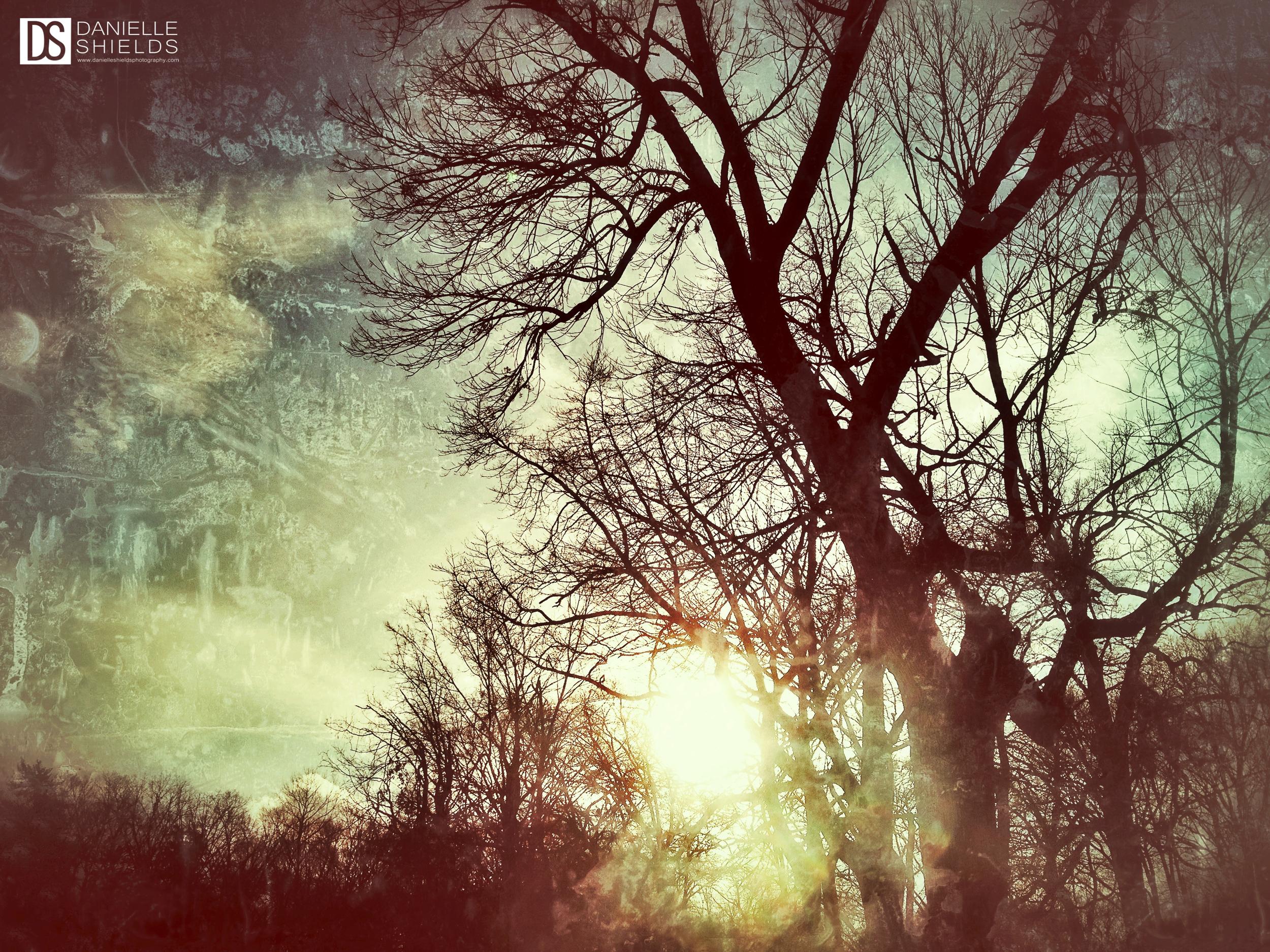 Rainbow Tree 3.jpg