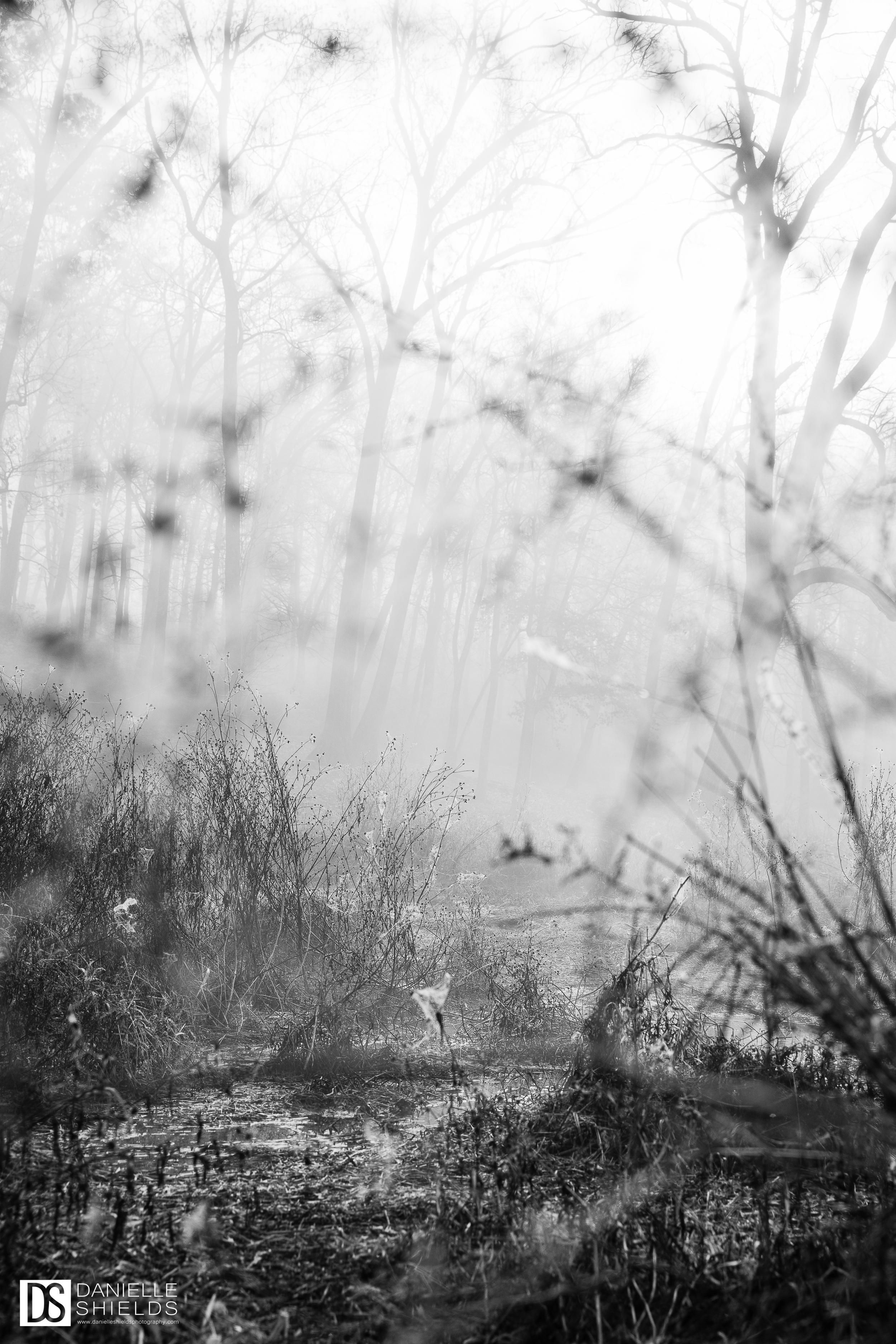 Dec Fog 7.jpg