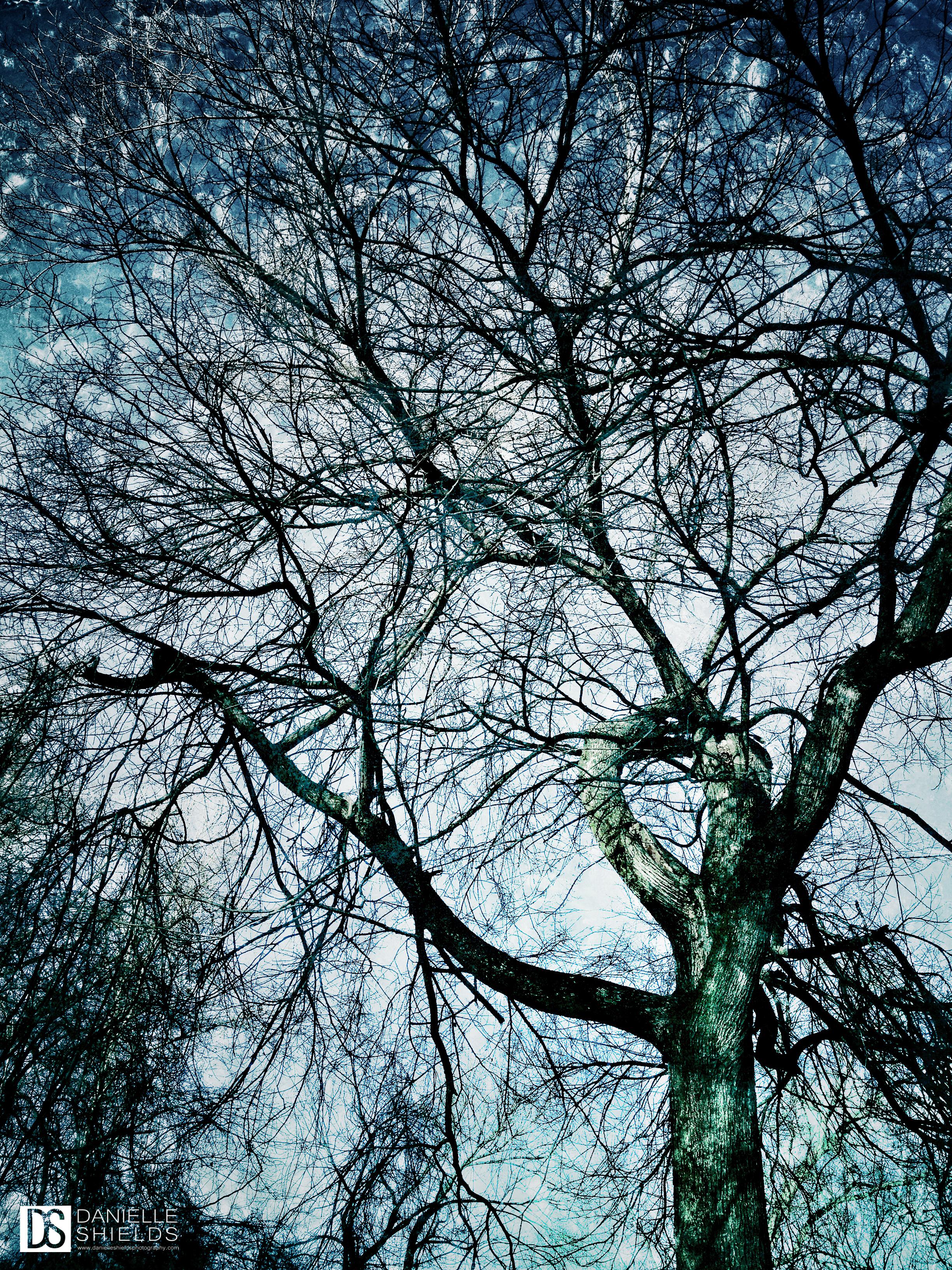 Rainbow Tree 10.jpg