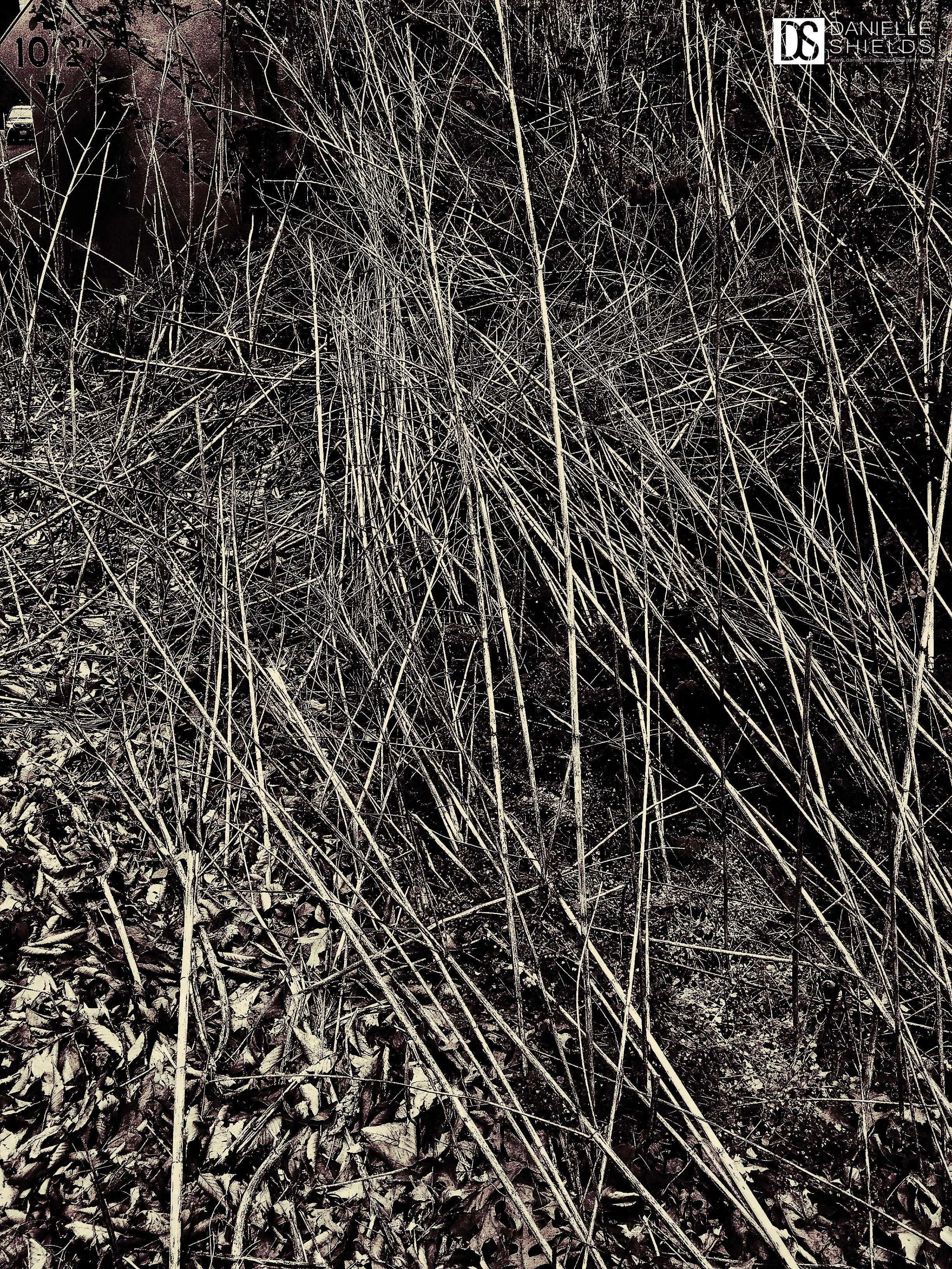 Grass 6.jpg