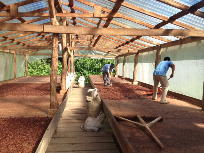 Cocoa beans being dried for Tejas Chocolates