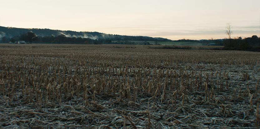 corn field morning.jpg