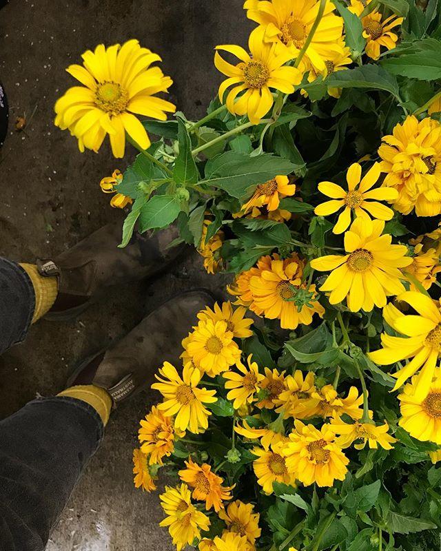 It's no secret yellow is my spirit color✨ #colorcoordinated #lavendersflowers #dscolor #yellow #flowers