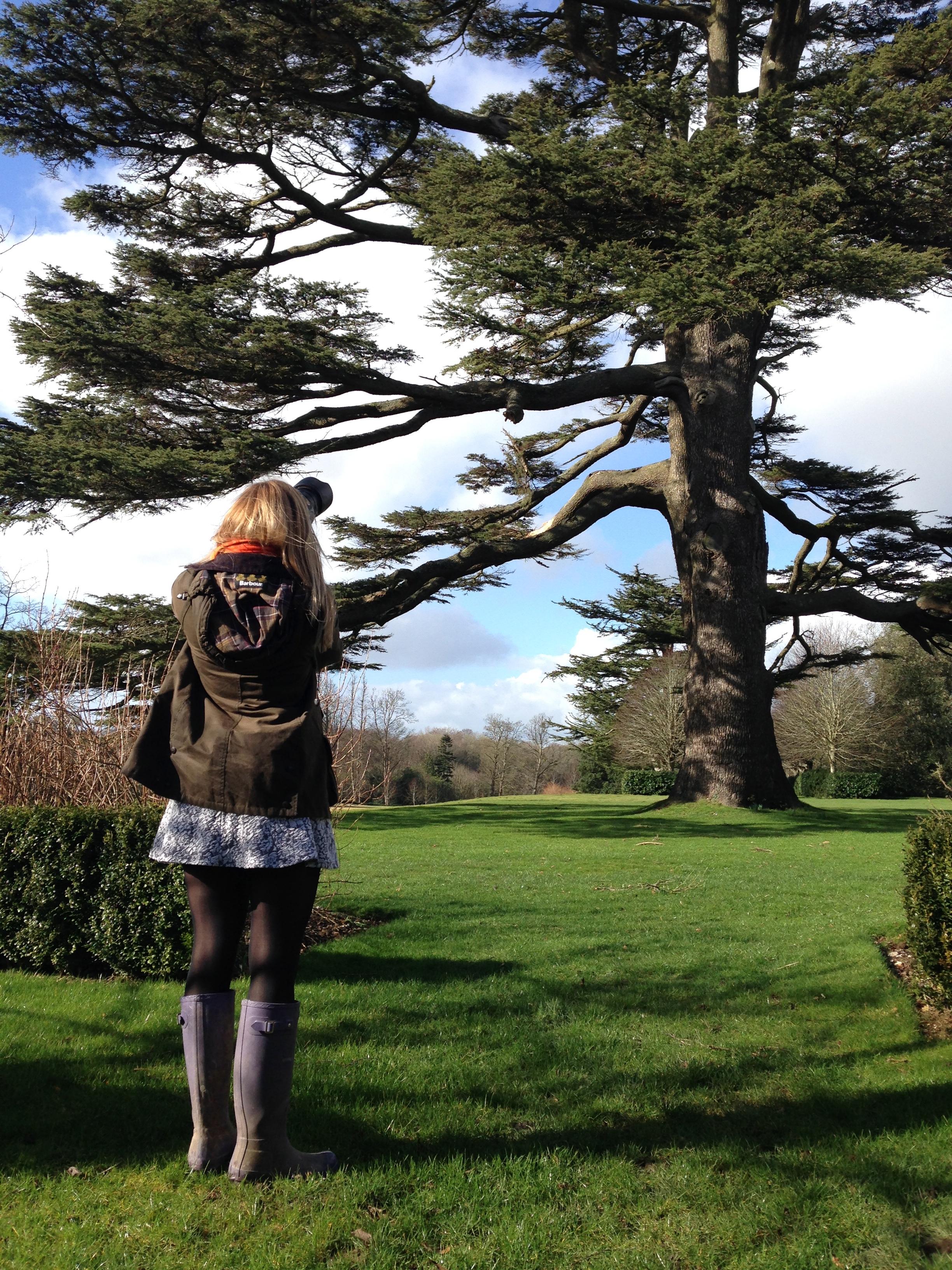 Nicole Cedar tree
