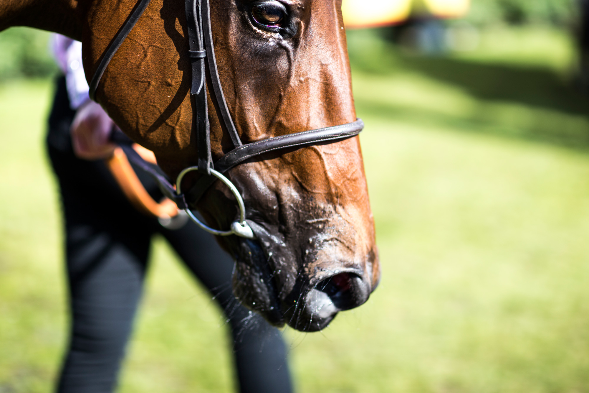 horse portrait at Glorious Goodwood