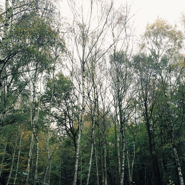 Epping Forest: 'The People's Forest' according to Queen Victoria.
