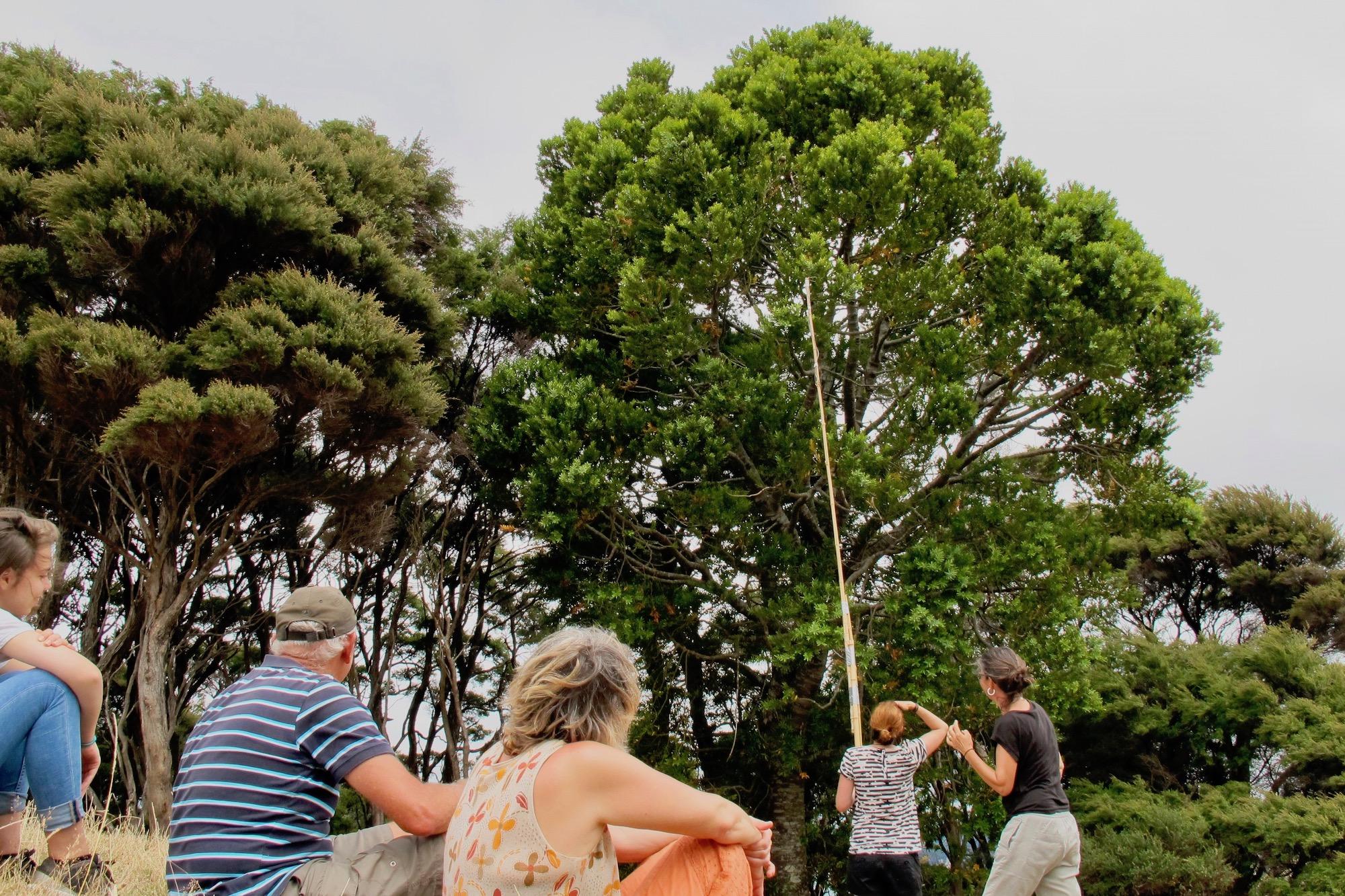 Kauri Cone Picking 2017.02.jpg