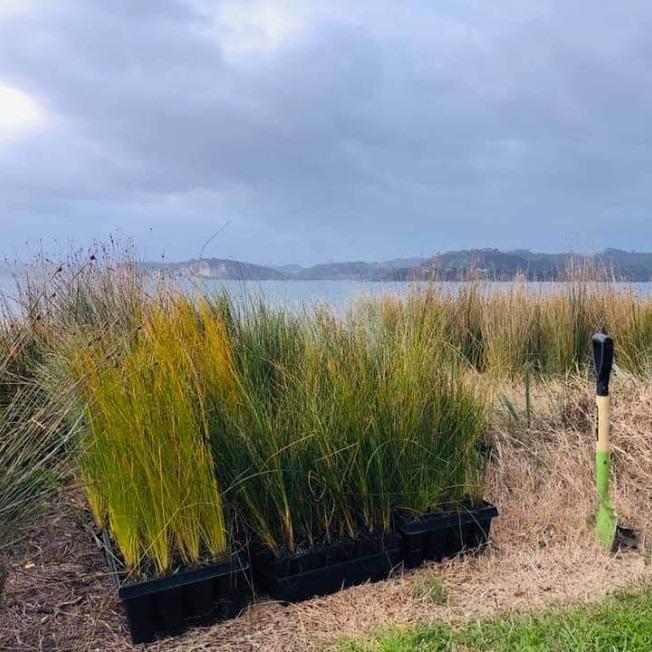 dune planting1.jpg