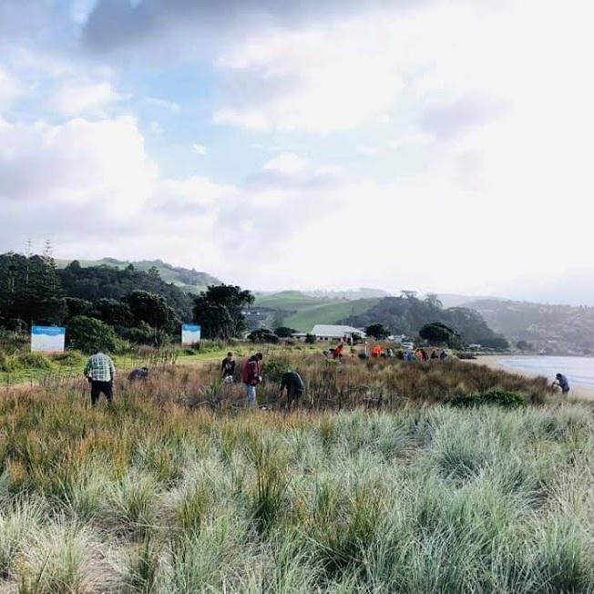 dune planting 4.jpg