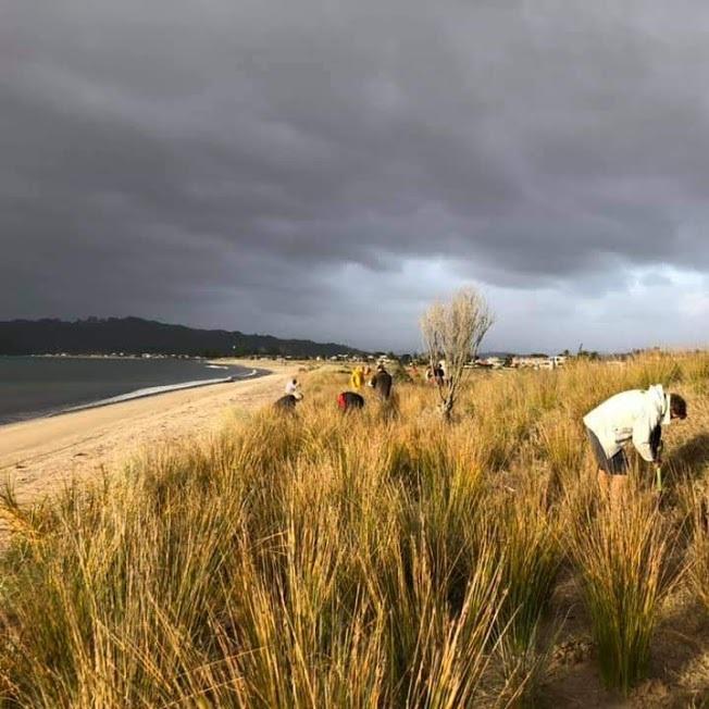 dune planting2.jpg