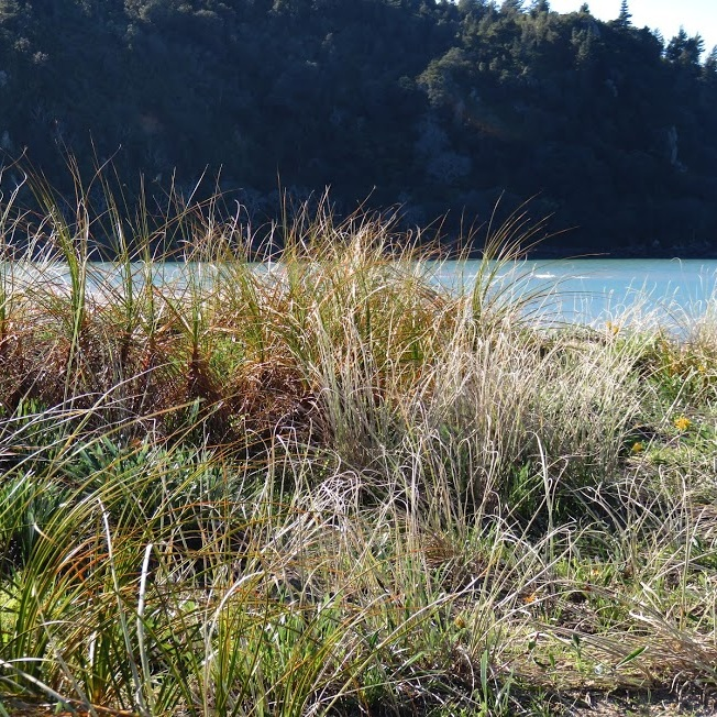 sand dune 4.jpg