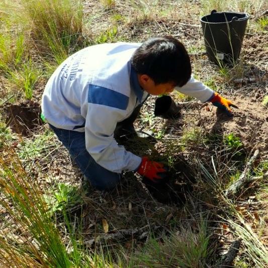 sand dune volunteer 2.jpg
