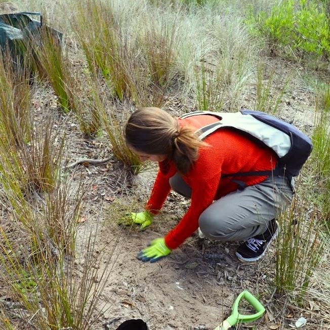 sand dune volunteer 1.jpg
