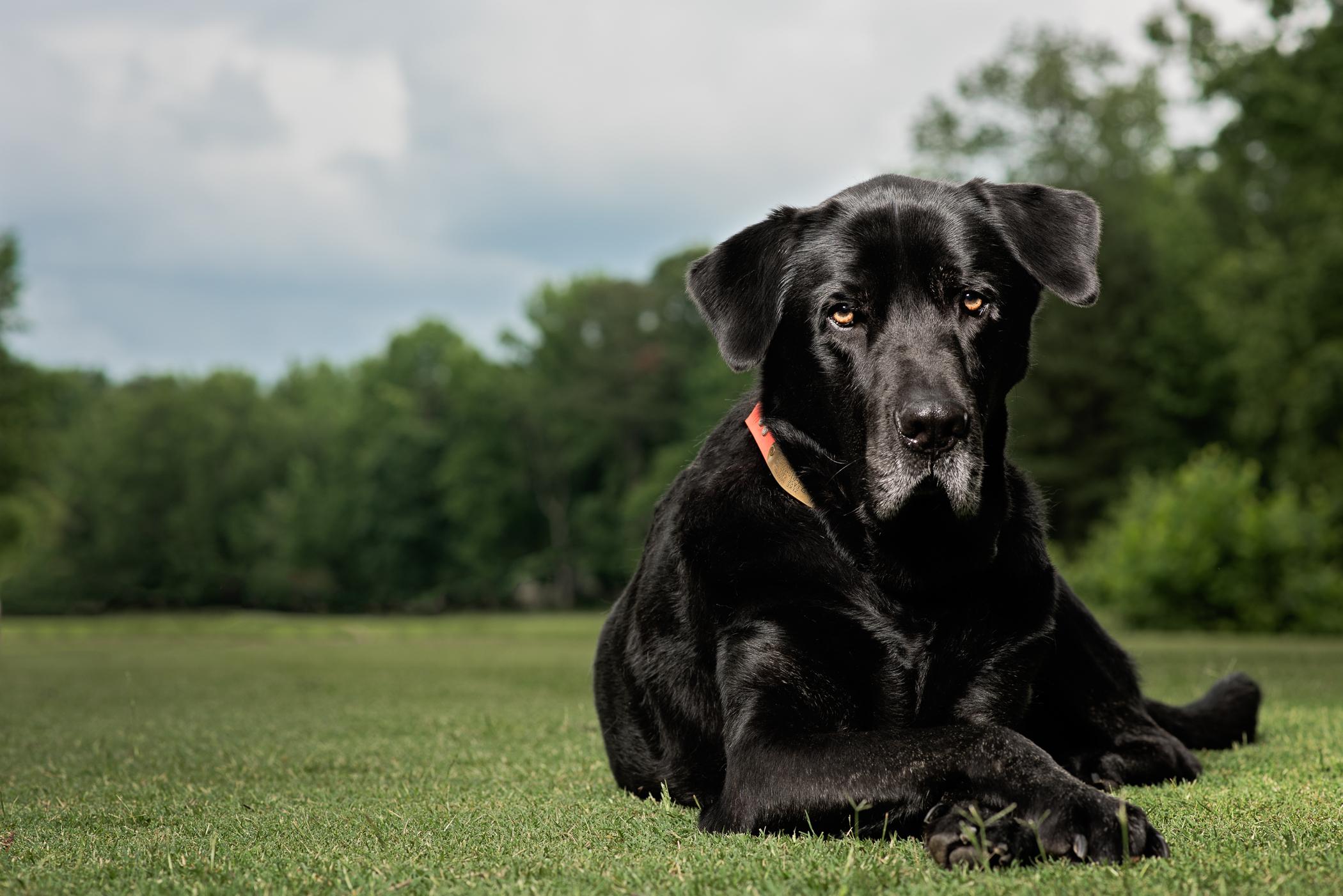 160530_Zeke on the Golf Course II_020.jpg