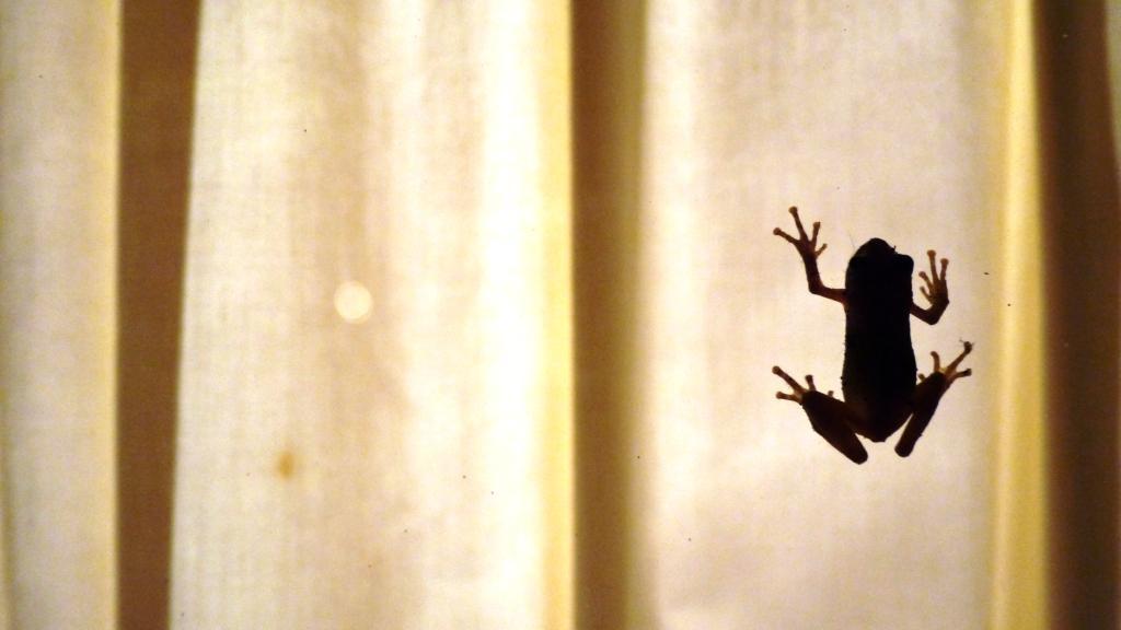 Little frog man.JPG