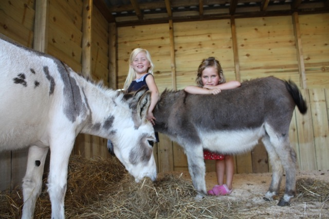 Chloe Izzy with Donkeys.jpg