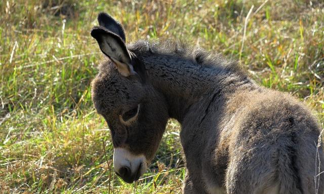 donkey-3722406_640.jpg