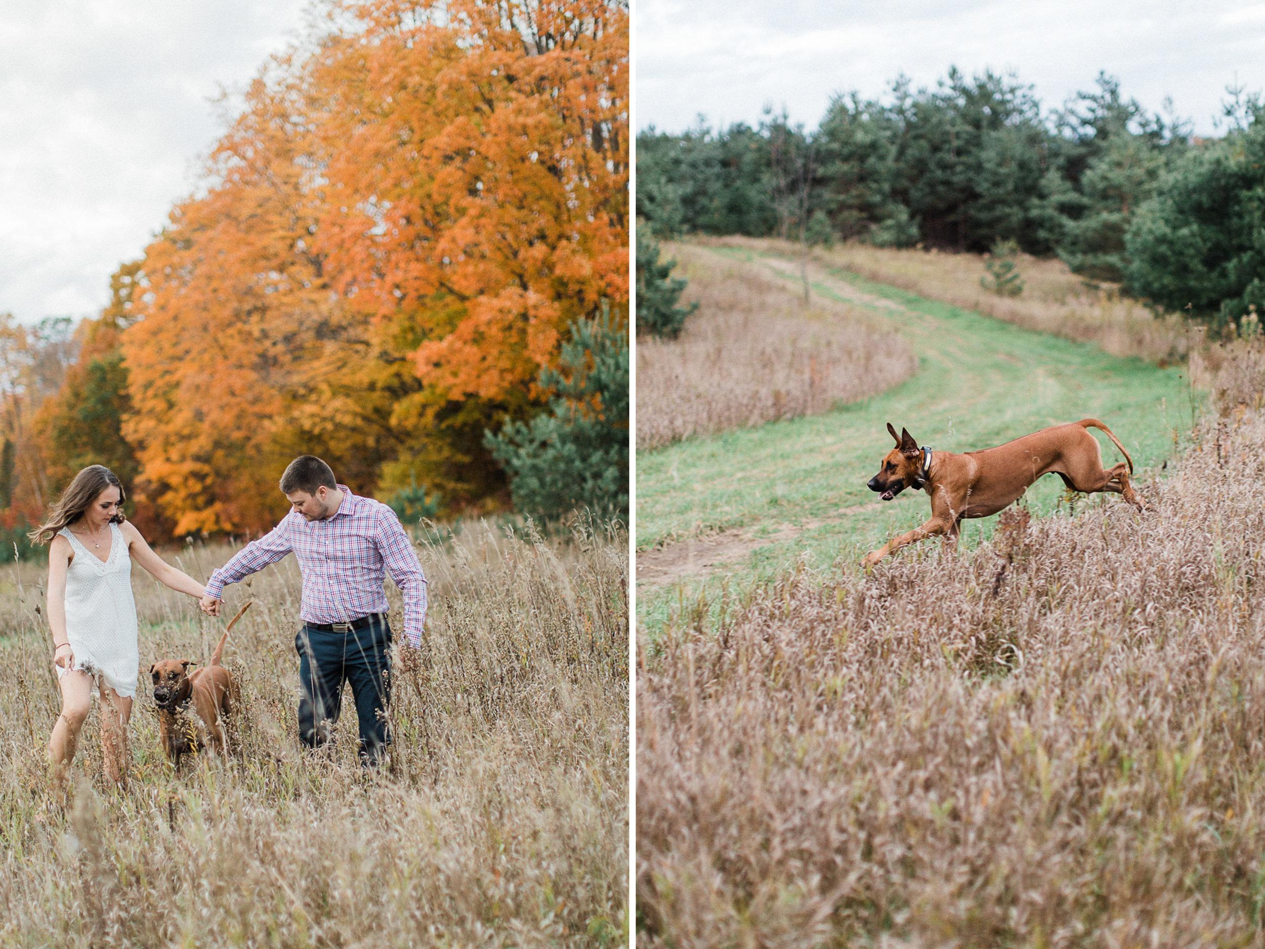 toronto_wedding_photographer_engagement_dog_inspiration8.jpg
