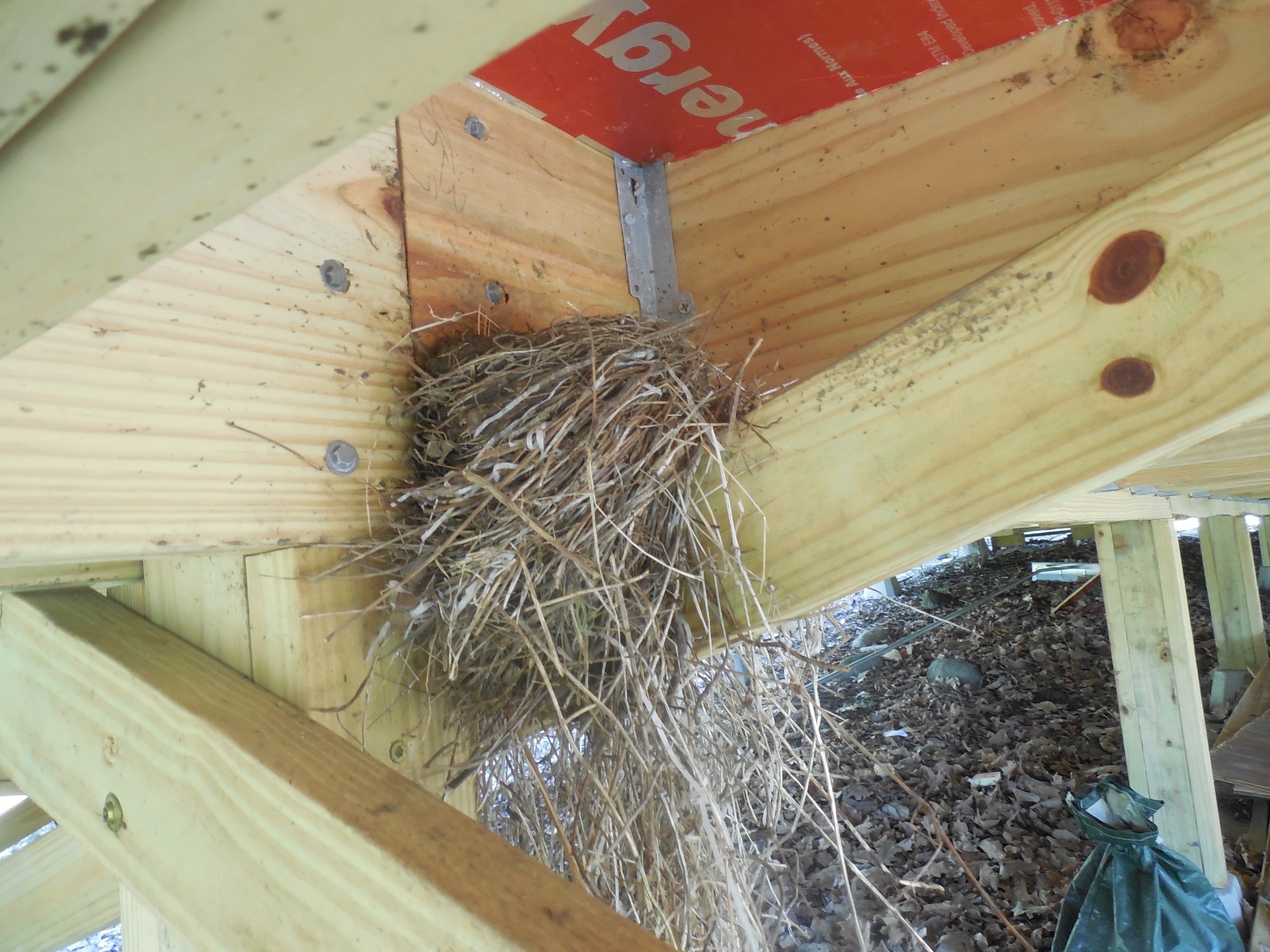 A robin's nest under the tent platform
