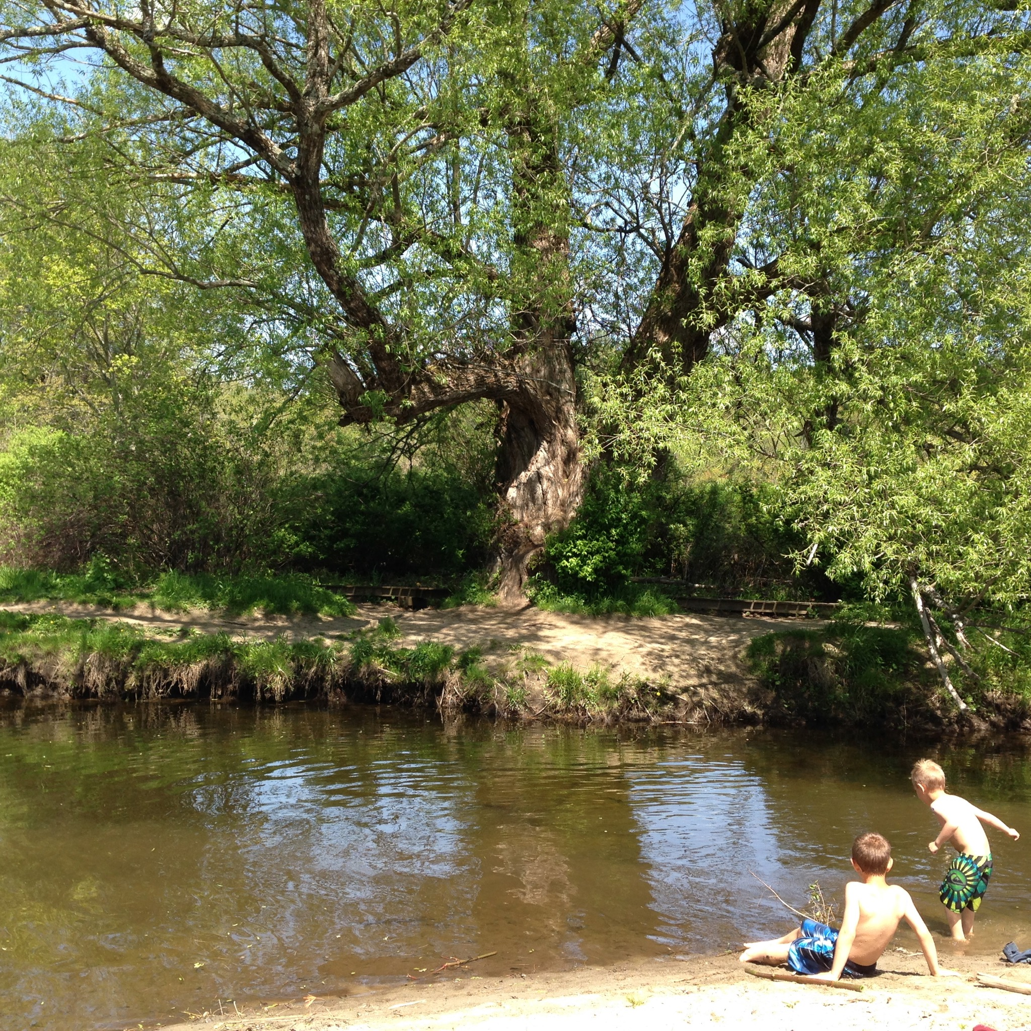 The perfect swimming holesurounded by massive weeping willows.