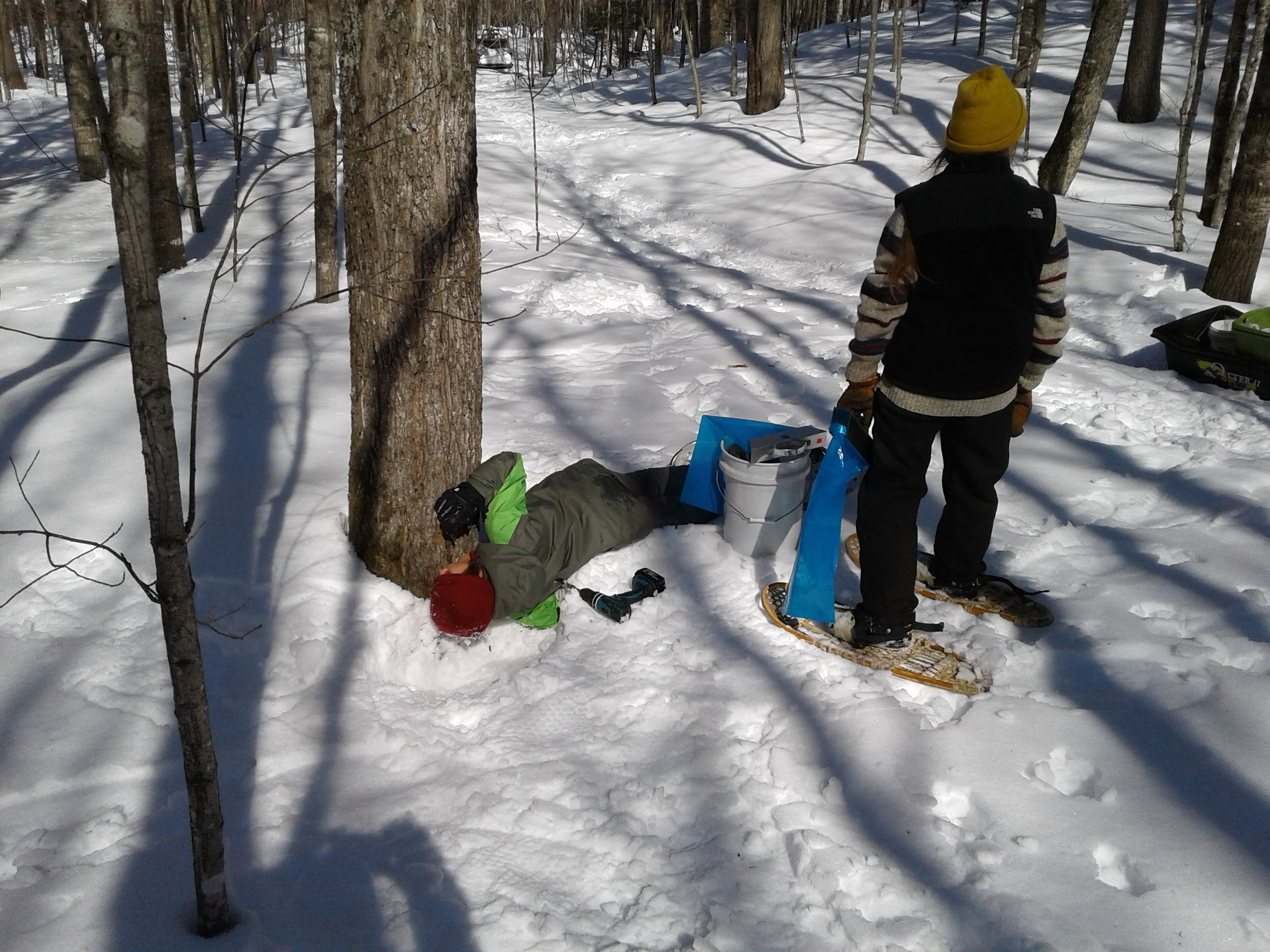 Me drinking sap from a newly tapped tree