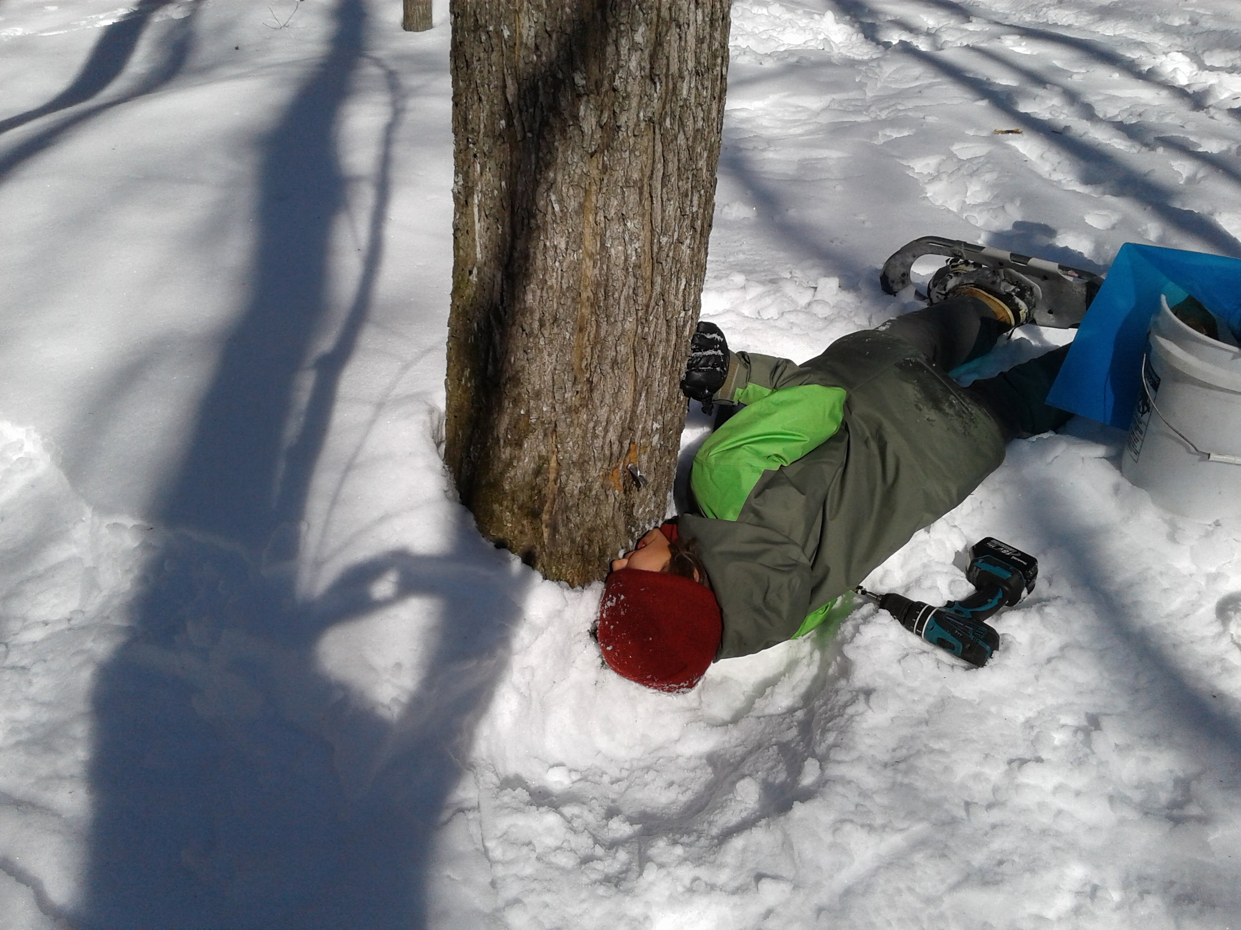 Drinking sap from tree