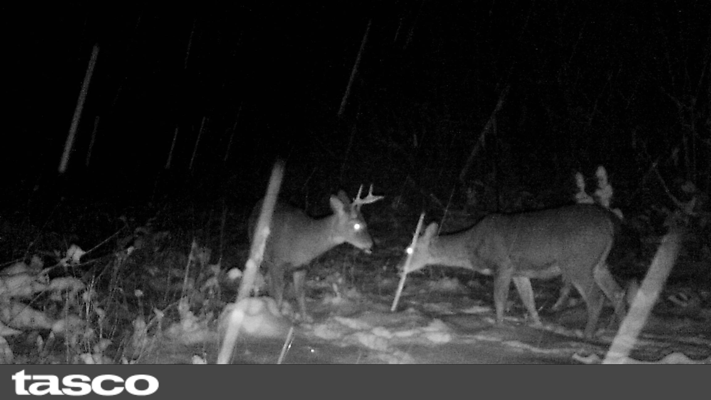 Buck and doe