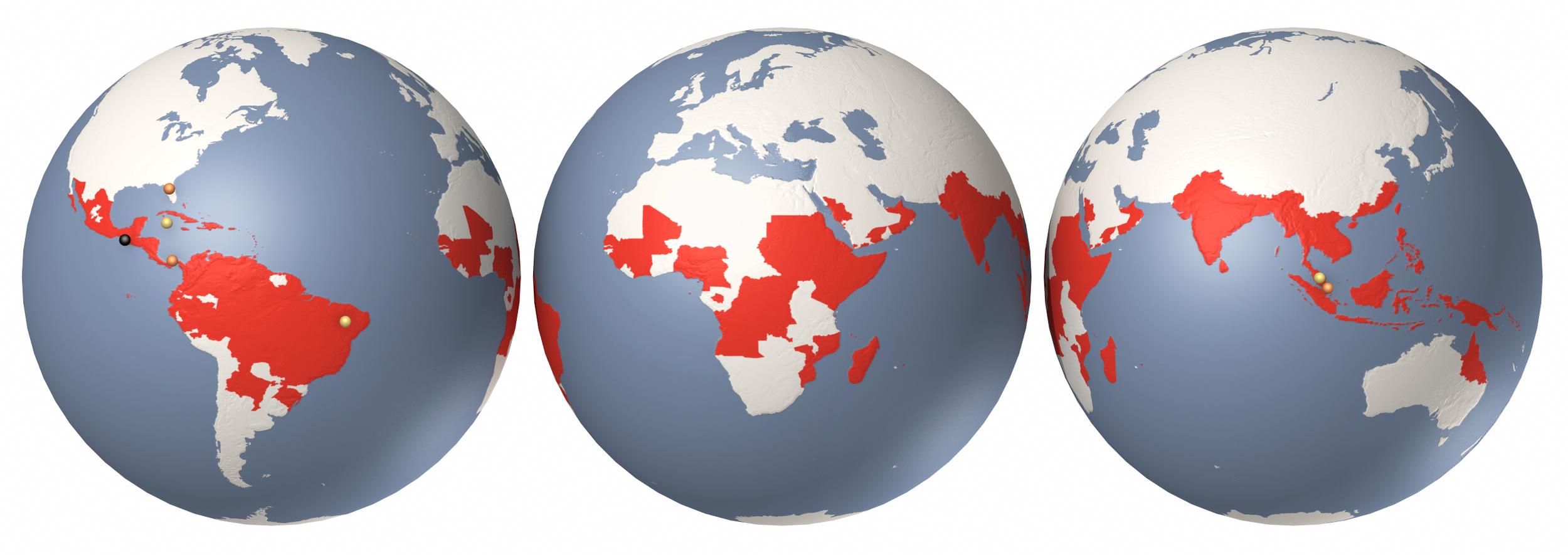 Scientific American - Dengue globes