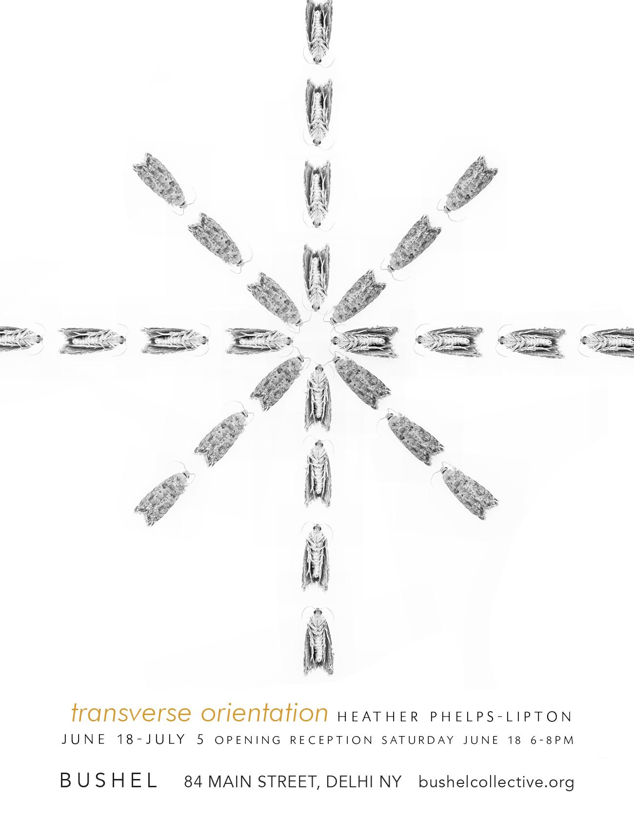 TransverseOrientation-Bushel-June18-card2.jpg