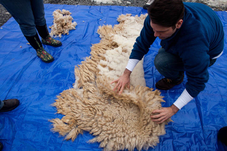 SheepShearing-87.jpg